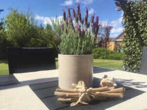 Gartentisch mit Pflanze und Blick in den Garten