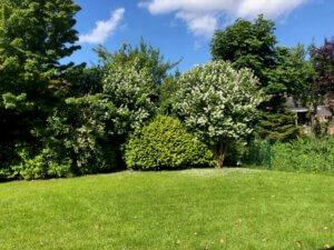 Garten mit blühenden Bäumen